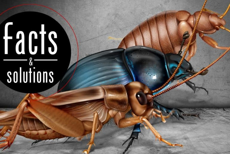 Header illustration of three bugs that look like cockroaches (but aren't).