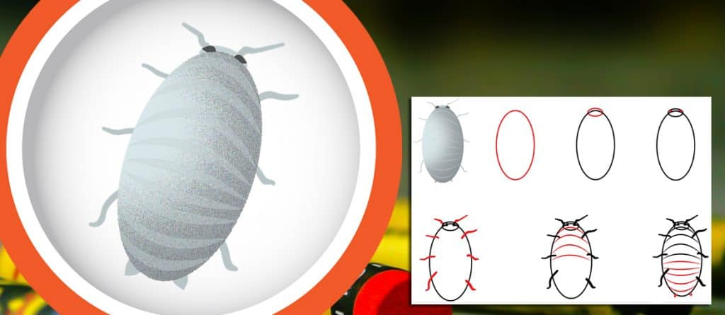 Header-draw a newborn cockroach nymph