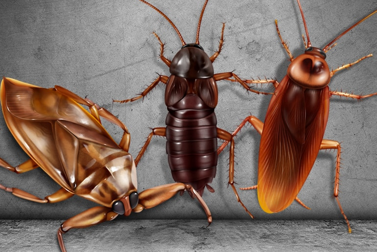 Illustration of a Giant Waterbug beside an Oriental and American cockroach