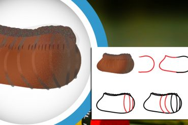 How To Draw a Cockroach Egg Step-By-Step