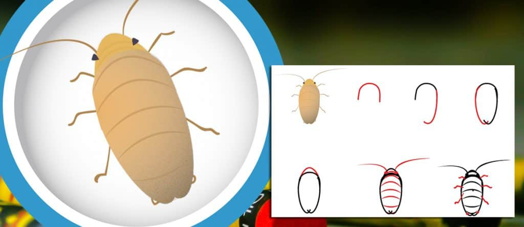 Header-draw a cockroach first instar