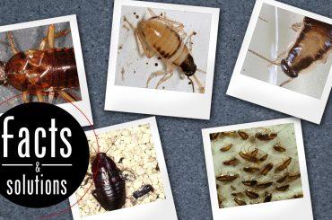 5 Polaroid photos depicting cockroach babies (nymphs)