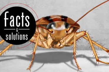 Front view illustration of a baby cockroach with words: Facts & Solutions