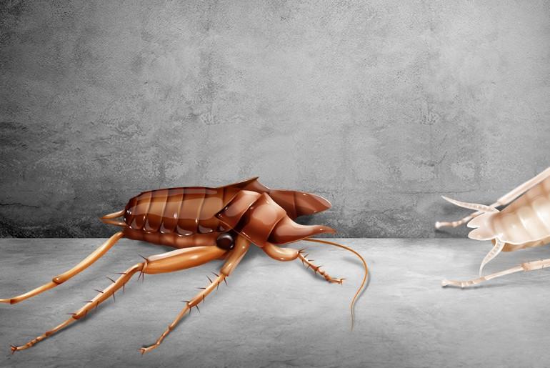 Discarded cockroach exoskeleton