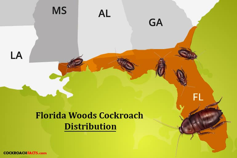 Florida Woods Cockroach distribution, southeastern U.S.A.