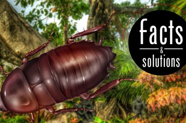 Florida Woods Cockroach illustration with words Facts and Solutions