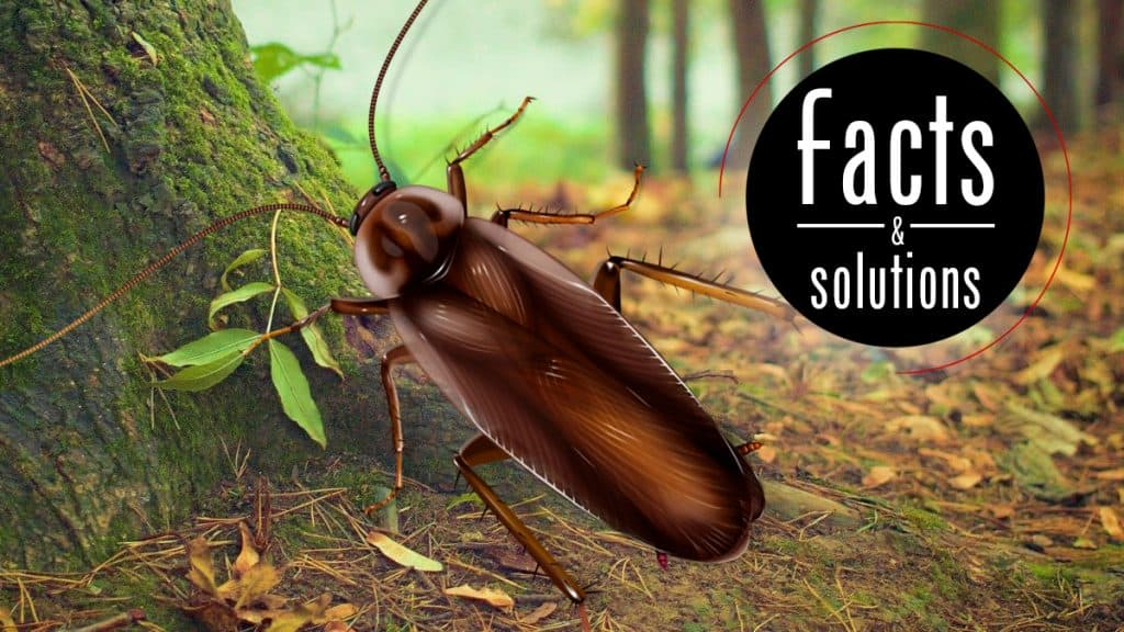 Pennsylvania Wood Cockroach Header: Male roach illustration over forest background