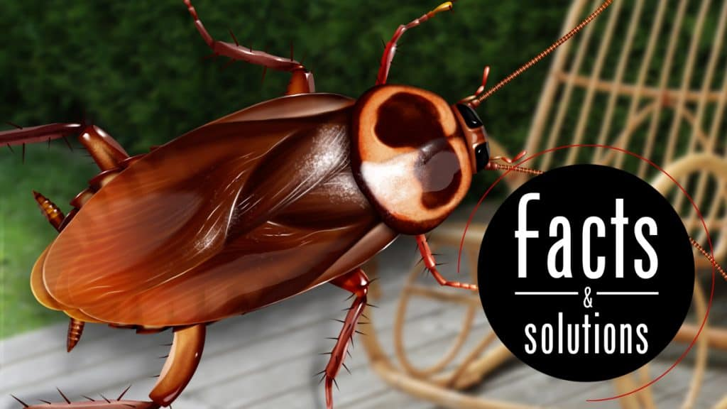 Australian cockroach illustration with words: Facts & Solutions