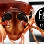 """Brown Banded cockroach illustration with words- """"Facts and Solutions"""""""