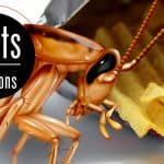 Illustration of a German cockroach in front of potato chip bag. Words: Facts and Solutions