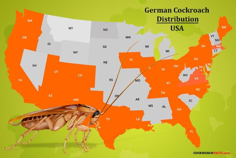 German cockroach range United States