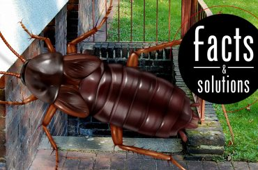 Illustration of an Oriental cockroach superimposed over basement entry