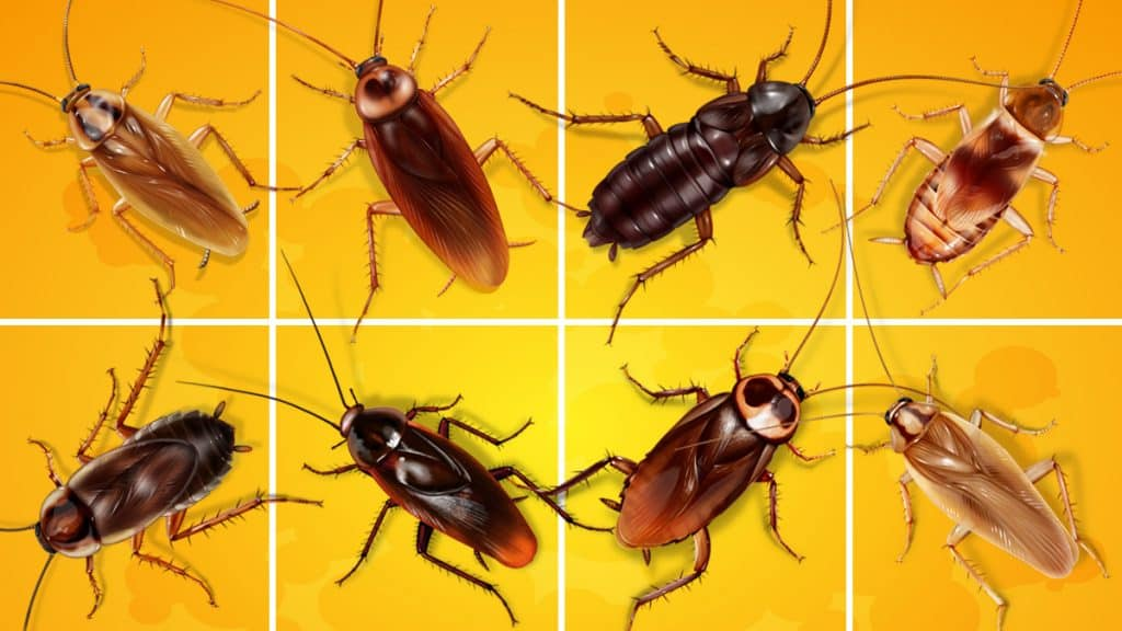 Illustration of 8 types of cockroaches against a yellow background
