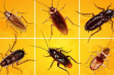Types of roaches: 6 pest cockroach species on a grid