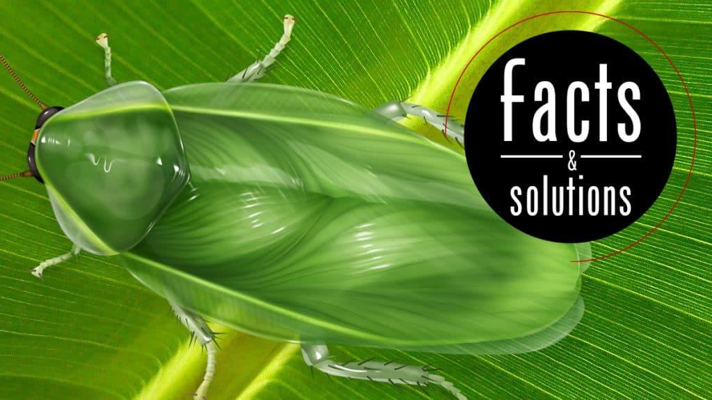 Header illustration: A green Cuban cockroach resting on a bright green banana leaf