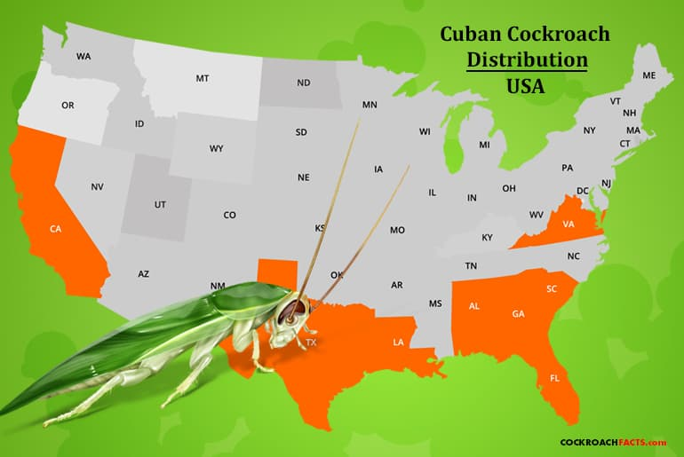 Cuban cockroach range as shown on a United States map