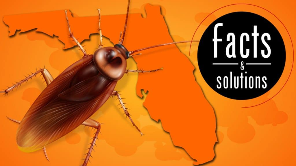 Illustration of a palmetto bug superimposed over an outline of Florida over an orange background