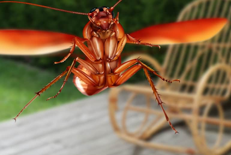 Illustration of a palmetto bug flying toward camera on porch
