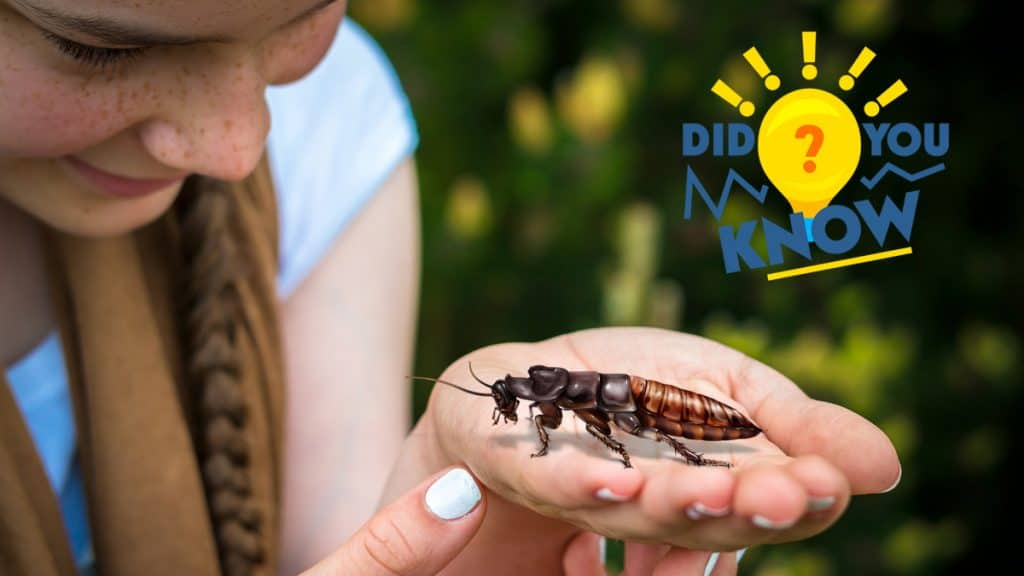Header illustration: A young girl gazes down at a Madagascar Hissing Cockroach in her palm