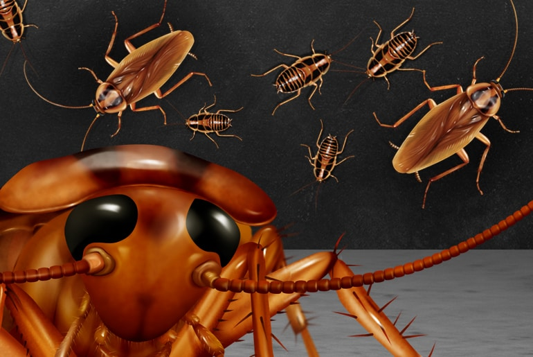 Illustration depicting many cockroaches on a black wall, with a front-facing cockroach in the foreground
