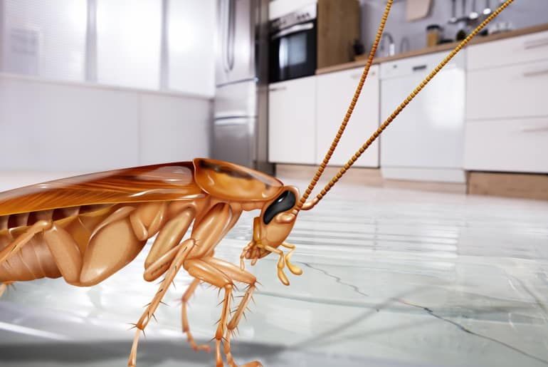 Illustration of one German cockroach in closeup on a kitchen floor
