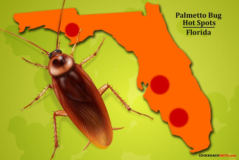 Palmetto bug hot spots in Florida highlighting areas in Fort Myers, Panama City, and Tampa