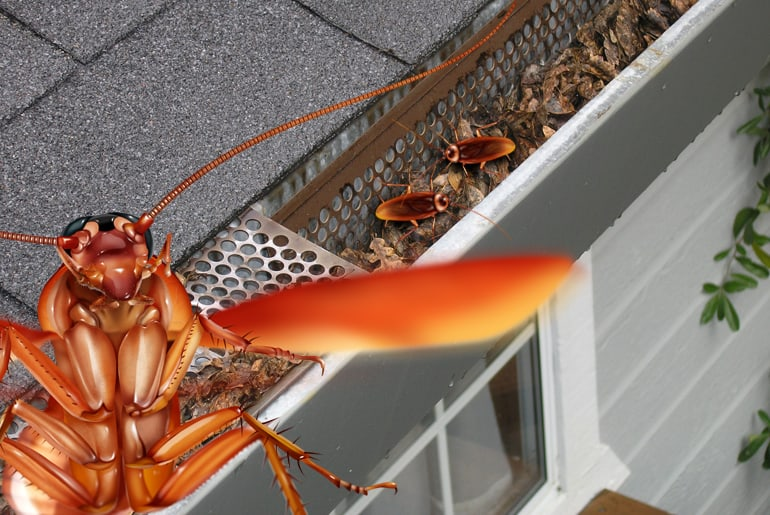 Illustration of three roaches on rooftop: Two in the gutter, and one cockroach flying away.