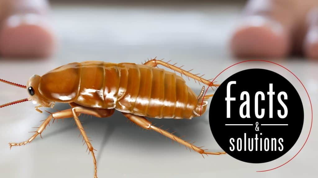 Header illustration of a single cockroach on the floor, a barefoot human in the background