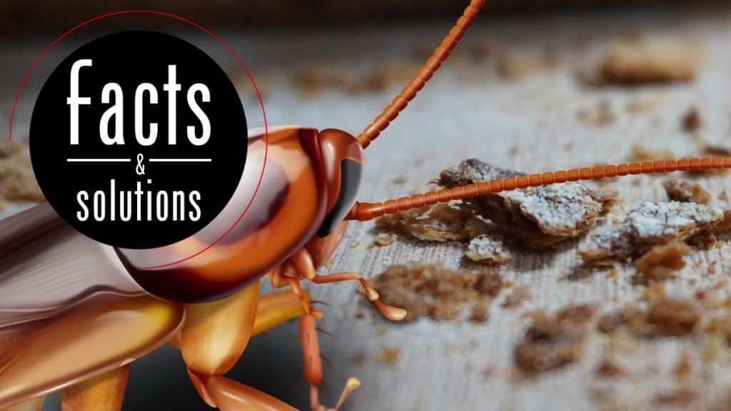 Header illustration of a cockroach in closeup discovering a collection of bread crumbs