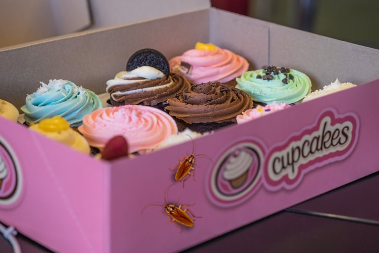 Illustration of 2 German cockroaches crawling into a pink box of cupcakes
