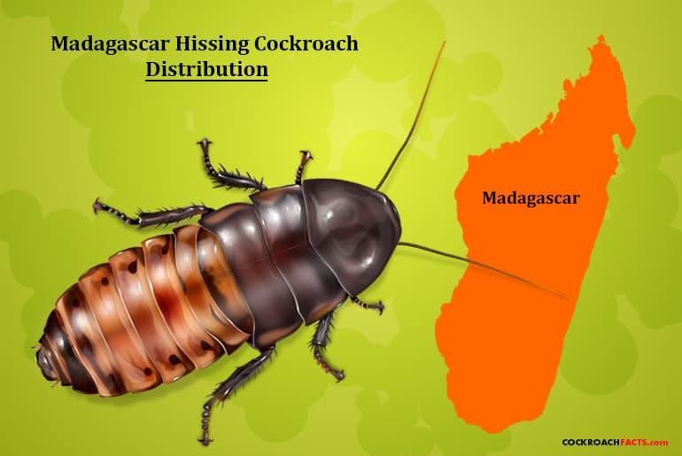 Map illustration of the Madagascar Hissing Cockroach range.