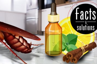 Header illustration of a cockroach in the kitchen being chased away by natural cockroach repellents of cinnamon, lemon, and tea tree oil