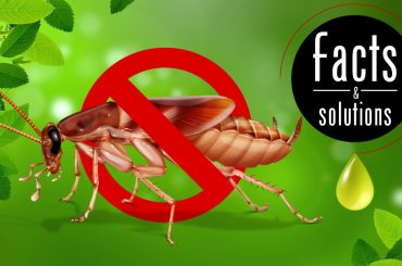 Header illustration of a cockroach behind a STOP symbol against a green stylized background surrounded by peppermint leaves