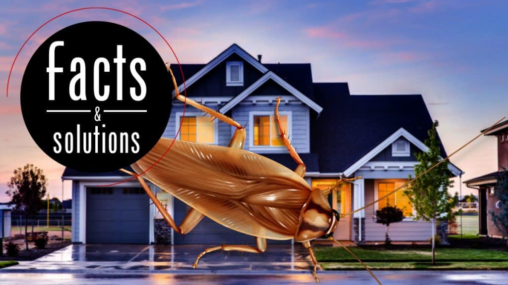 Header illustration of a cockroach superimposed over a home, seeking a way to get in