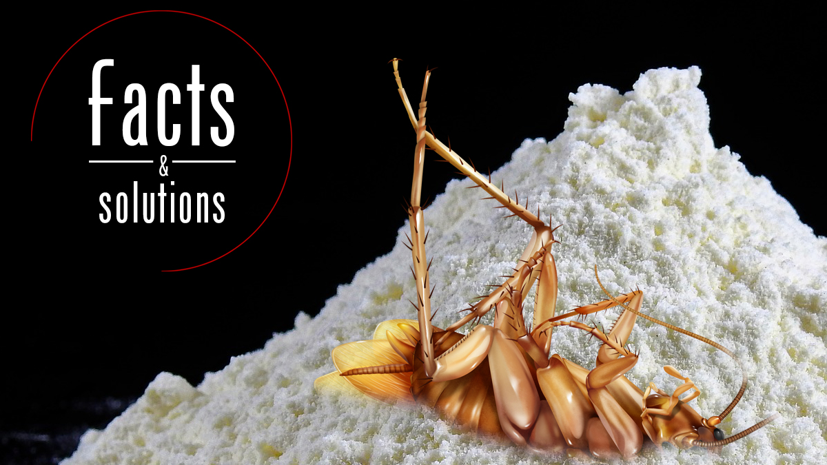 Diatomaceous Earth Roaches What You Need To Know Cockroach Facts
