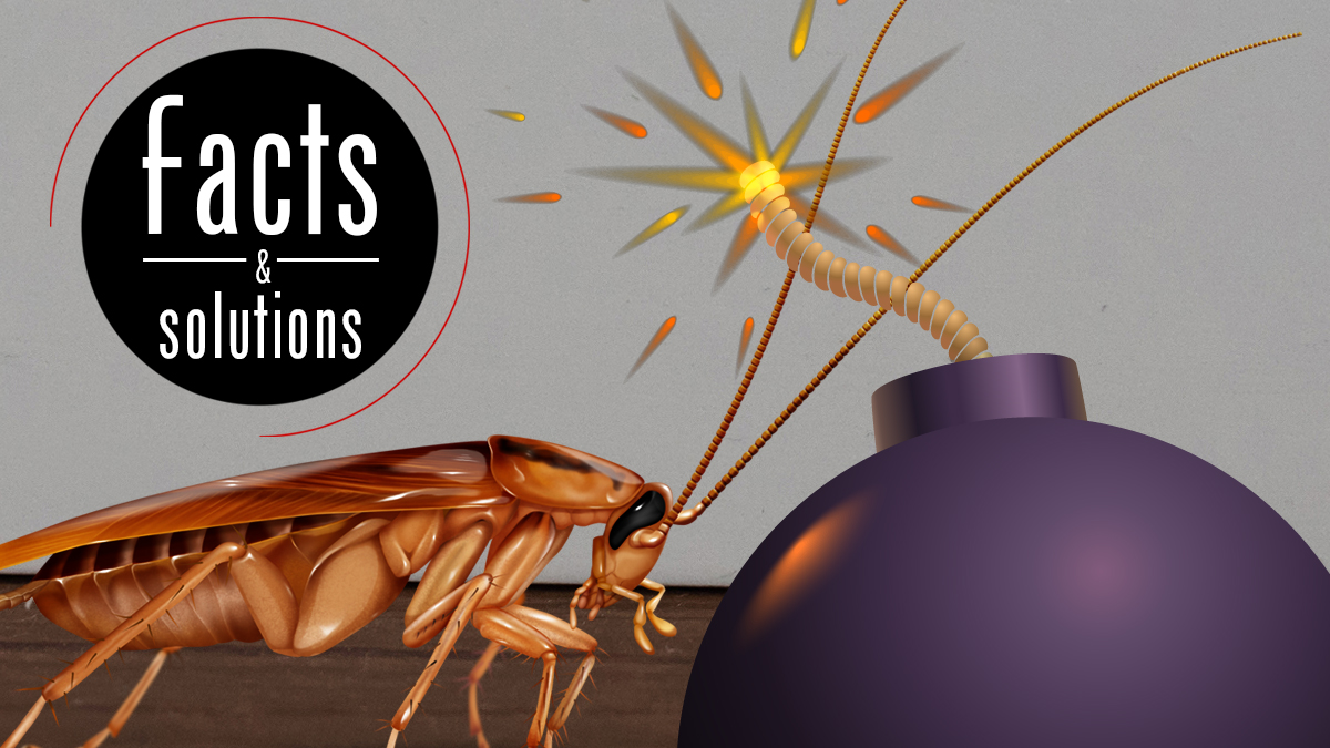 The Best Roach Bomb May Not Be A Bomb At All Cockroach Facts