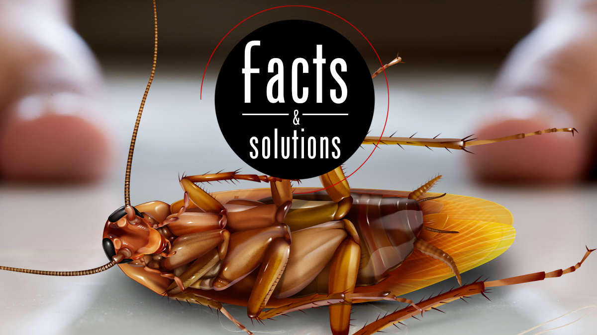 A Guide To Cockroach Control At Home Cockroach Facts